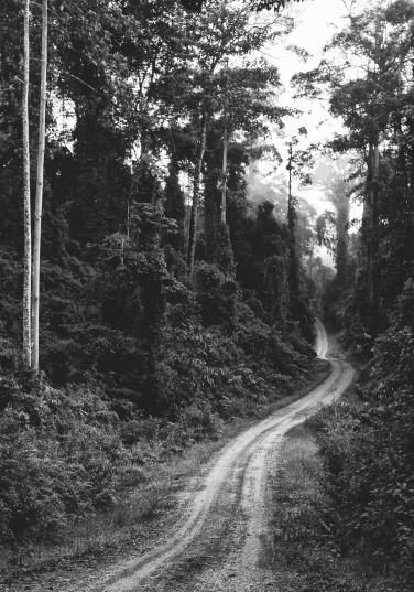 Borneo jungle road