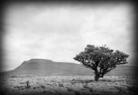Malham tree