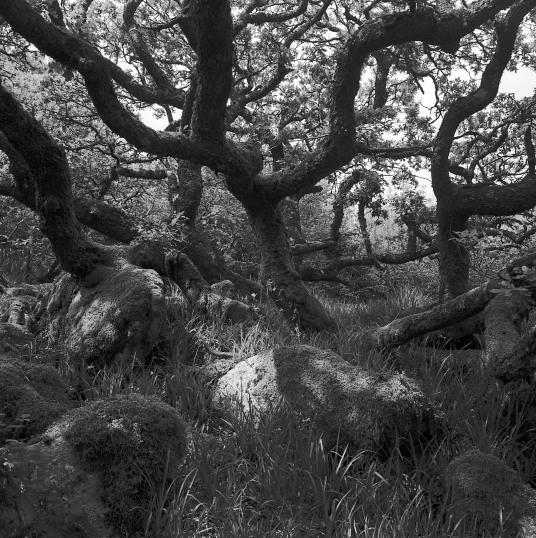 Merrivale Wood