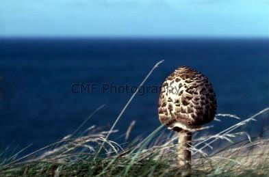 mushroom on cliff edge