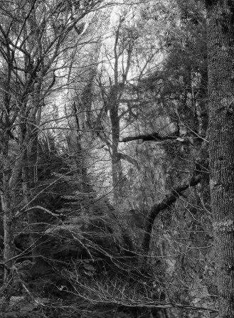 Tree shadow, Vermont