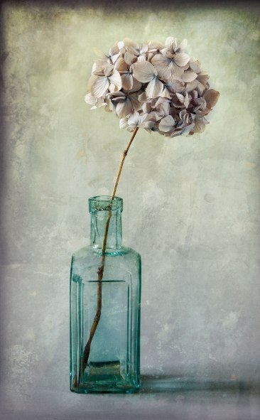Hydrangea-in-green-bottle-texture-display-sharp
