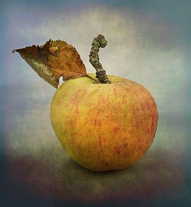 Apple-with-leaf-astlk-into-the-light-inkjet-sharp